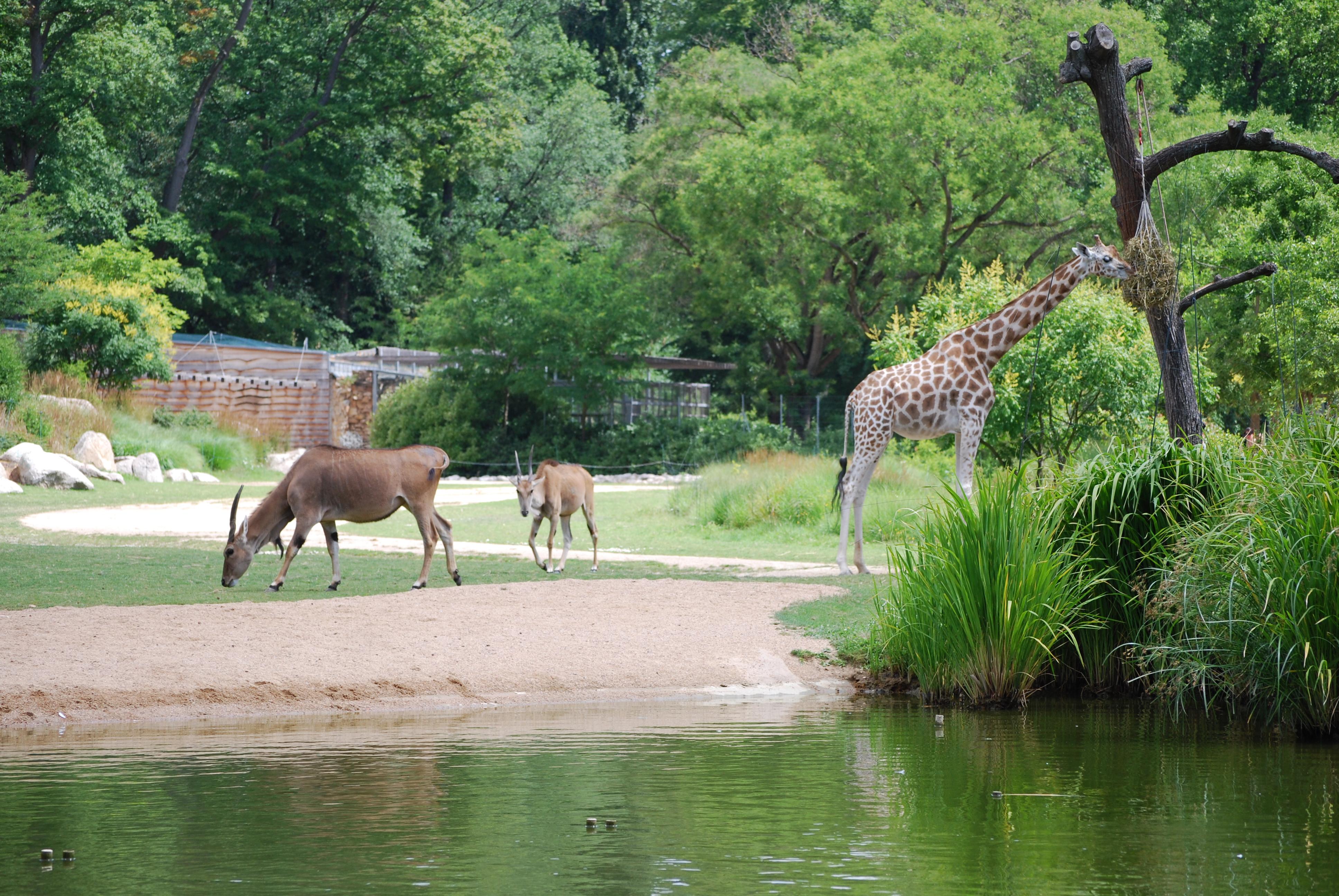 le parc zoologique loisirs du parc de la t te d 39 or. Black Bedroom Furniture Sets. Home Design Ideas