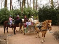 Les Calèches et poneys au Parc de la Tête d'Or à Lyon