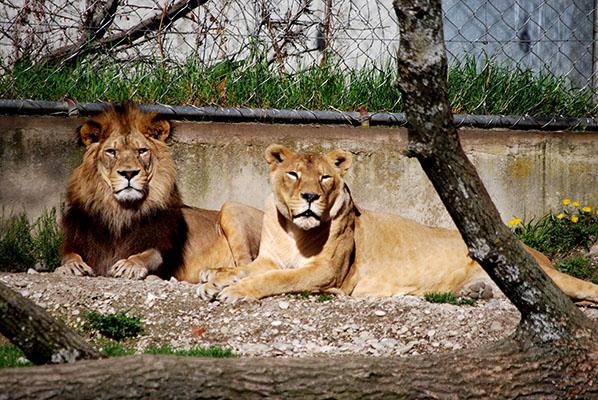 Zoológico no parque de la Tête d'Or em Lyon